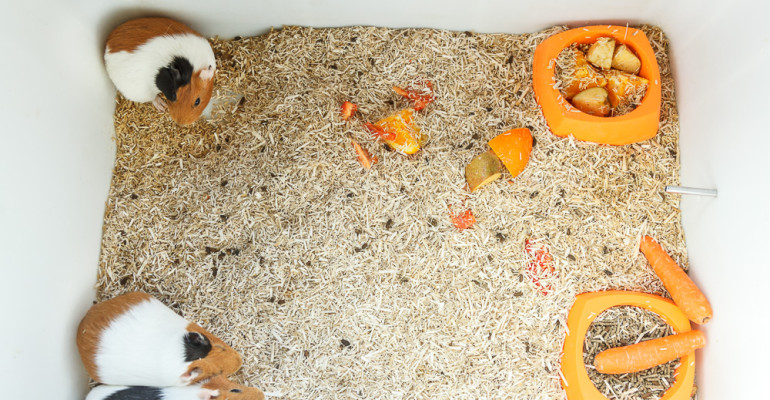 L'avorrida vida dels conills porquins. Daily photo #74