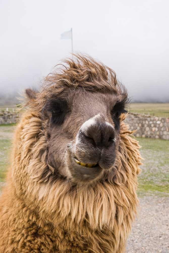 La llama que llama. Daily Photo #304