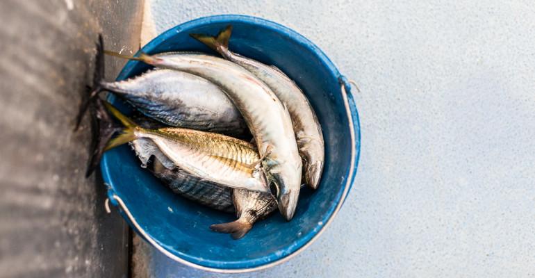 Pesca. Daily photo #135