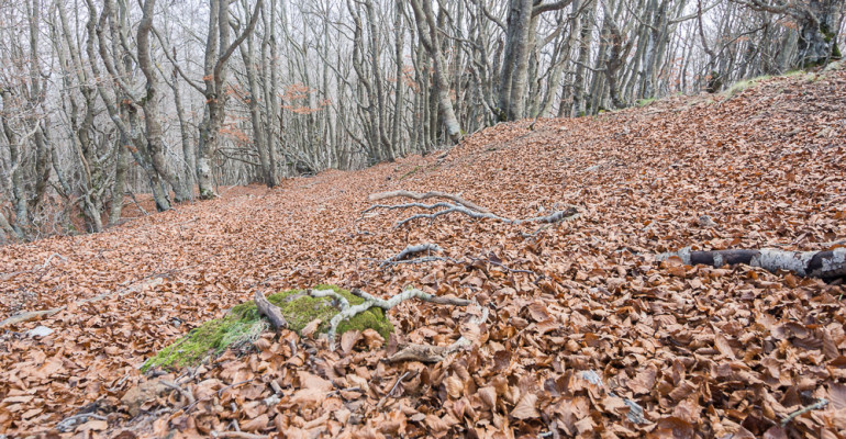 Bosc Despullat. Daily photo 52