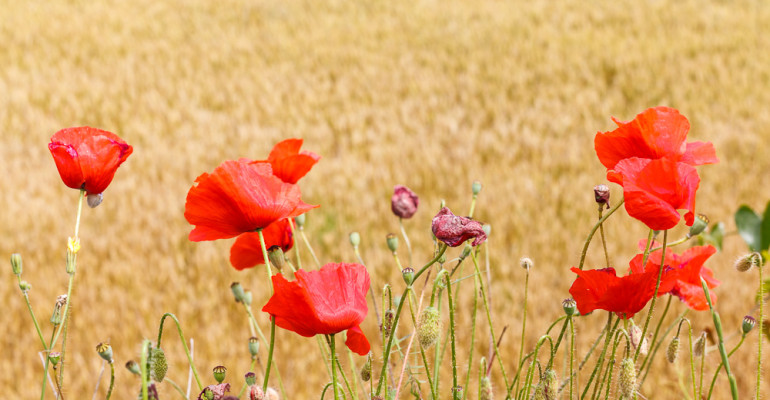 Quan els camps floríen. Daily Photo #259